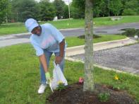My mom planting flowers at the beautification day at church.